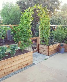 The current state of the patio garden a sight for sore eyes; a sight we've been waiting on since first dreaming up the backyardgardenreno the passionfruit vines filled in and have finally met one is part of Garden vines -