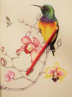 Amazon Birdtopia Coloring Book 9781780677552 Daisy Fletcher Books Gorgeous Artwork By Cindy Butler On May 17 2016 Summary