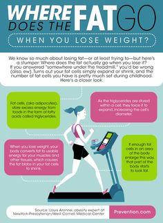 """Sabemos tanto acerca da perda de gordura mas sabe """"Para onde vai a gordura quando perdemos peso?"""""""