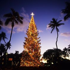 Hawaii Honolulu Christmas...such a beautiful site!  Aloha and Mele Kalikemaka!