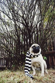 46 dogs wearing handsome scarves