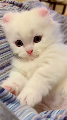 Baby Animals Super Cute, Cute Baby Dogs, Cute Little Animals, Baby Cats, Cute Puppies, Funny Cute Cats, Cute Cats And Kittens, Cute Funny Animals, Kittens Cutest