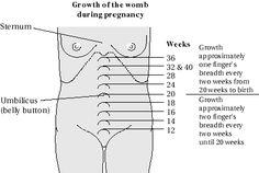 My Uterus Be Up To At 24 Weeks Child Nursing Ob