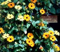 If you dony have alot of time for gardening or even if you do. I always go along all of my privacy fence in the backyard with vines. most bloom all or most of the summer they are easy to care for and do not require alot of time or attention. Best of all they are beautiful. black eyed susan vine
