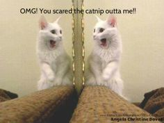 Cat Scared Funny Image