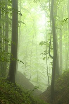 Green is the prime color of the world, and that from which its loveliness arises.  Pedro Calderon de la Barca