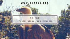 Premiere Info-Film Greifvogelzentrum Grifon