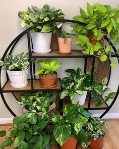 Legende Happy We're loving this pothos collection posted by Having a few is one way to keep your… GARDEN GOALS - Dekoration Site / 2019 Room With Plants, House Plants Decor, Plant Decor, Indoor Garden, Garden Plants, Indoor Plants, Hanging Plants, Diy Hanging, Decoration Plante