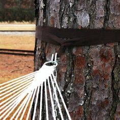 Pawleys Island Hammock Tree Straps Instead of putting a hole in your trees give them a hug with the Pawleys Island Hammock Tree Straps. Made of weather-resistant nylon, includes 2 zinc plated S-hooks. - Length 10 ft. - Warranty 1 year - Color Brown - Material Nylon - Width 2 inches Size 10 ft. x 2 in. - Weight Capacity 450 pounds