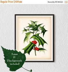 BLACK FRIDAY SALE Holly print Holly by RestoredBotanicalArt