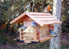 oiseaux-en-hiver-oiseau-nourriture