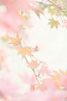 ** autumn