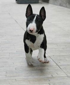 There's that perfect baby Bullie again. <3