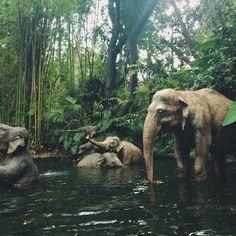 Elephants :] http://teacakecafe.net