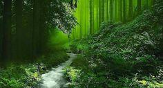 La diversidad en los bosques es vital, cada especie cumple una función