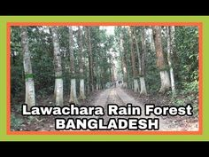 Lawachara National Park & Nature Reserve Rain Forest | Sylhet, Banglades...