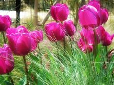 spring whispers