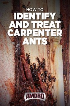 Stop carpenter ants before they cause significant structural damage to your home. Diy Pest Control, Weed Control, Get Rid Of Ants, Insecticide, Insect Repellent, Garden Pests, Rustic Signs, The Ranch, Good To Know