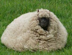 Inside this wool is a sheep :-) - made by © Alie Hoogenboezem-de Vries