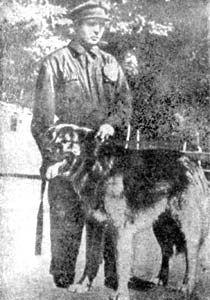 "Legenday georgiano Nagashi ""Jamal"" (1950) antcestor otra de las perreras URSS"