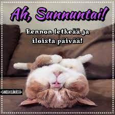 Sanoja elämästä - Mukavaa sunnuntaita ❤️ | Facebook Sunday Quotes, Facebook, Cats, Animals, Gatos, Animales, Animaux, Animal, Cat