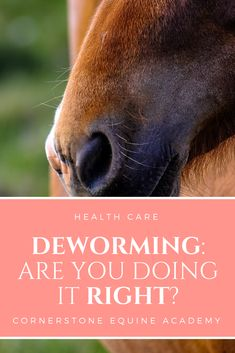 One of the most basic equine health practices we think we must do as good horse owners is de-worming. All horses have some level of worm infestation, but with so many products out there, and conflicting advice online, how do you know where to start? In this post, we'll teach you how to develop your own, customized, horse deworming schedule. | Cornerstone Equine Academy #equine #horse #health #deworming #riding #horsebackriding