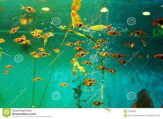 Tropical Fish Tank Aquarium Stock Image - Image of aquatic, dream: 61056295