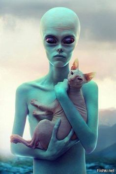 An Alien & A Sphynx. Which one is the alien? I Love Cats, Crazy Cats, Cool Cats, Animals And Pets, Cute Animals, Sphinx Cat, Alien Creatures, Aliens And Ufos, Alien Art