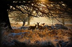 Richmond Park is the largest enclosed space in London, extending over a truly massive 2,500 acres. Taking a walk here feels very much like you're right out in the countryside, especially with its large herds of deer that call the park home.