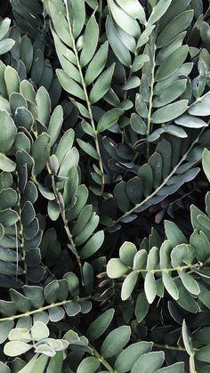 FREE Sage Green iPhone Wallpaper | Sage Green Aesthetic Wallpaper | Just Jes Lyn