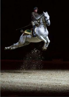 A beautiful Lipizzaner doing the Airs Above Ground.