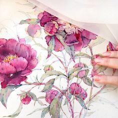 Peonies in watercolor on Behance