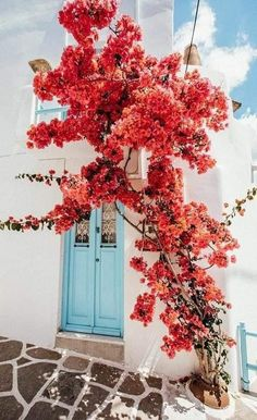 Wallpaper Keren, Flower Wallpaper, Iphone Wallpaper, Wallpaper Wallpapers, Nature Aesthetic, Flower Aesthetic, Image Beautiful, Beautiful Places, Applis Photo