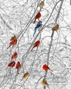 Birds in Winter (Robert Coomer)