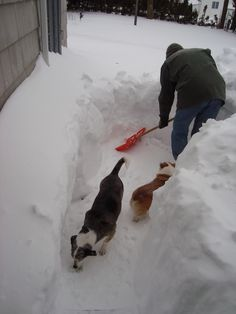 Tony Abbott is a good dog daddy! Poor Kip and Betty don't know what to do with all this Connecticut snow! #corgi @Egmont USA