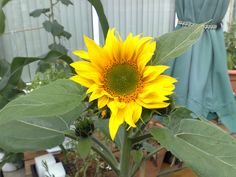 One of my short stories, one that is very important to me.  #shortstories #shortstory #storyblog #sunflower #forest