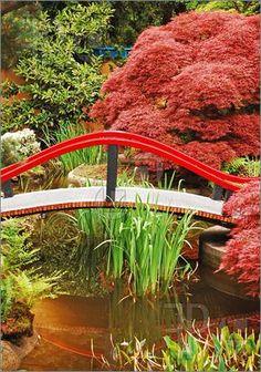 Bridge over japanese garden pond--love Japanese maples