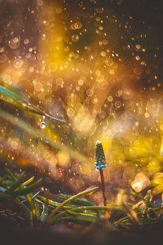 ...в золотом дожде купаясь... by Tatyana Averina on 500px