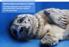 Vancouver Aquarium's Marine Mammal Rescue
