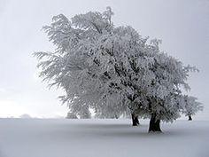 imagen de invierno