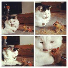 cat meet chipmunk
