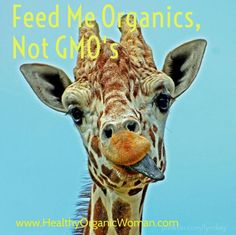Nothing like a hungry giraffe on our Steve Jobs Photo, Experiment, Tongue Twisters, Australia Day, Eating Organic, Photo Quotes, Healthy Nutrition, Organic Recipes, Wildlife