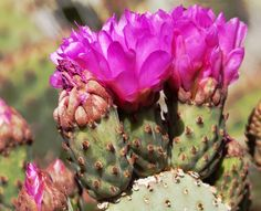 Five, top locations to enjoy blooms in Arizona's Sonoran Desert