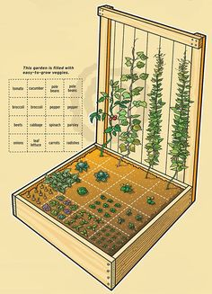 You can grow lots of food in a small space by placing plants close together in squares instead of traditional rows.