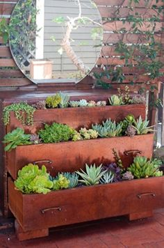 ciao! newport beach: creative succulents