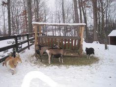 Big hay rack for a ton f goats! Farm Projects, Animal Projects, Garden Animals, Farm Animals, Sheep Feeders, Goat Hay Feeder, Barn Layout, Farm Plans, Round Pen