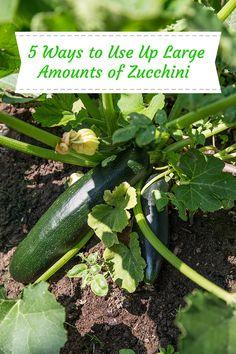 anzucht von k rbis und zucchini im april zucchini k rbis und gartentipps. Black Bedroom Furniture Sets. Home Design Ideas