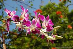 Many flower and garden pictures with free wallpaper photos.