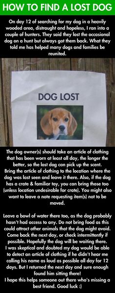How To Find A Lost Dog - Since losing one of my dogs is one of my biggest fears, this is a good thing to pin.