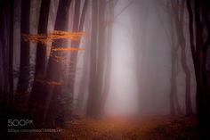 The end of the fall by erwinstevens1 via http://ift.tt/2gWVzaN